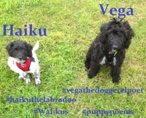 Haiku today is going on her first solo Walkus - 4 penned with a wistful feel to them.