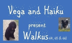 haiku-poetry walkus 64-65-66