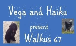haiku-poetry walkus 67