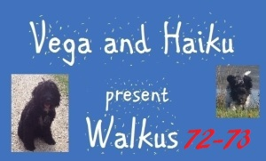 haiku-poetry walkus 72-73