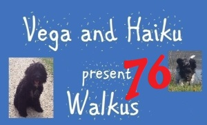 haiku-poetry walkus 76