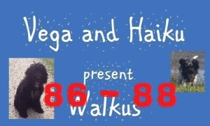haiku-poetry walkus 86-88
