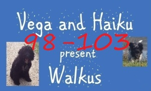 haiku-poetry walkus 98-103