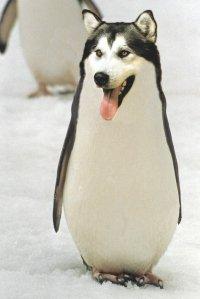 wolf-penguin