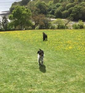Trelissick, Cornwall 18-05-2015