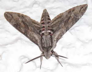 Not thith exact moth