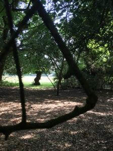Forestal of New Forest 08-08-2015