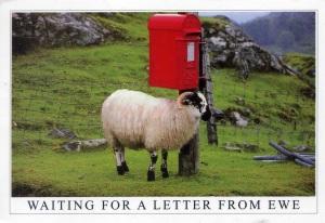 Wish Ewe Were Here!